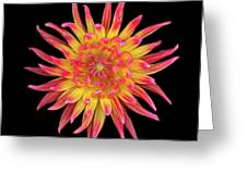 Dahlia Two Greeting Card by Christopher Gruver