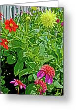 Dahlias By A Fence In Golden Gate Park In San Francisco, California  Greeting Card
