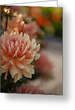 Dahlias Season Greeting Card
