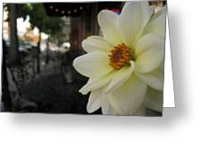 Dahlia's View Point Greeting Card
