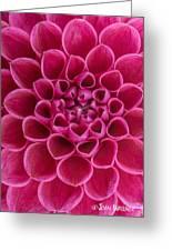 Dainty Dahlia Greeting Card
