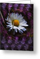 Dainty Daisy Greeting Card