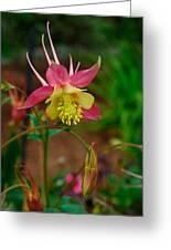 Dainty Flower Greeting Card