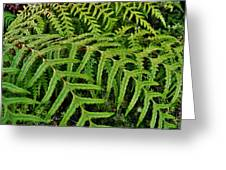 Dainty Fronds Greeting Card