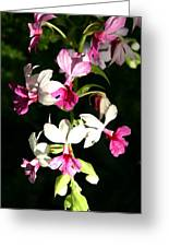 Dainty Orchids Greeting Card