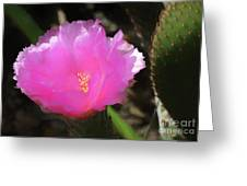 Dainty Pink Cactus Flower Greeting Card