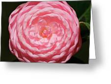Dainty Pink Camellia Greeting Card