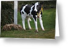 Dairy Cow Stature. Greeting Card