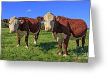 Cattle Andover New Hampshire Greeting Card