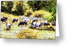 Dairy Cows In A Summer Pasture Greeting Card by Janine Riley