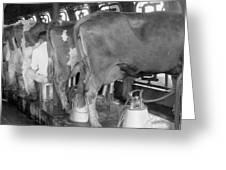 Dairy Farm, C1920 Greeting Card