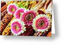 Daises On Indian Corn Greeting Card
