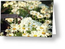 Daisies And A Hand Plow Greeting Card