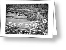 Daisies At Queens View In Greyscale Greeting Card