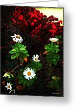 Daisies At The Boathouse Greeting Card