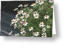 Daisies By The Bench Greeting Card