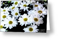 Daisies By The Dozen Greeting Card