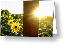 Daisies Dune Fence Sunrise Delray Beach Florida Greeting Card