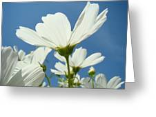 Daisies Floral Art Prints Canvas Daisy Flowers Blue Skies Greeting Card