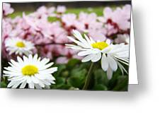 Daisies Flowers Art Prints Spring Flowers Artwork Garden Nature Art Greeting Card