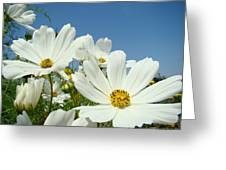 Daisies Flowers Art Prints White Daisy Flower Gardens Greeting Card