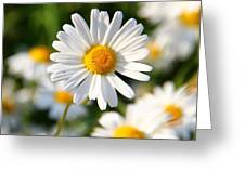 Daisies Flowers Field Blurriness 107162 2048x2048 Greeting Card