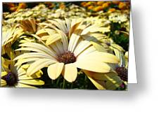 Daisies Flowers Landscape Art Prints Daisy Floral Baslee Troutman Greeting Card