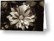 Daisies In Sepia Greeting Card