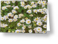 Daisies In Spring Greeting Card