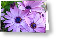 Daisies Lavender Purple Daisy Flowers Baslee Troutman Greeting Card