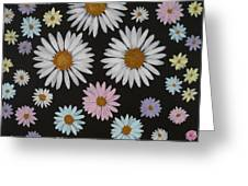 Daisies On Black Greeting Card