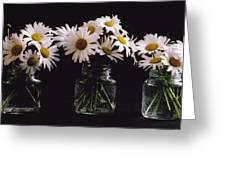 Daisies On Black Greeting Card