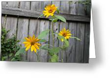Daisies On The Fence Greeting Card
