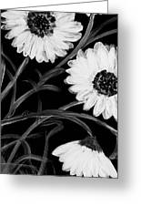 Daisies St Night Greeting Card