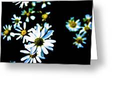 Daisies Greeting Card by Grebo Gray