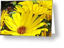 Daisies Summer Garden Art Print Yellow Daisy Baslee Greeting Card