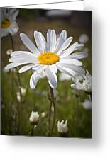 Daisy 1 Greeting Card
