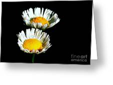 Daisy 2 Greeting Card
