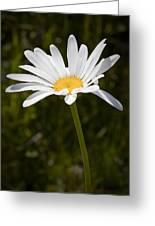 Daisy 3 Greeting Card