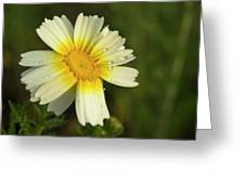 Daisy #5 Greeting Card