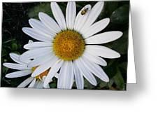 Daisy And Company Greeting Card