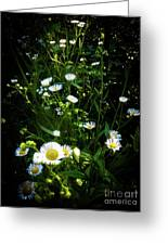 Daisy And Friends Greeting Card