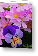 Daisy And Pansy Greeting Card
