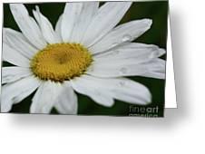 Daisy And Raindrops Greeting Card