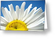 Daisy Art Prints White Daisies Flowers Blue Sky Greeting Card by Baslee Troutman
