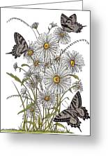 Daisy At Your Feet Greeting Card