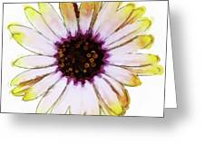 Daisy Decal Deco Greeting Card