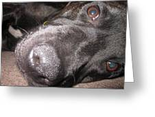 Daisy Dog Greeting Card