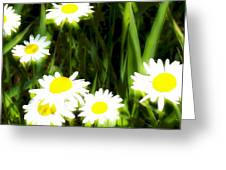 Daisy Dream Greeting Card