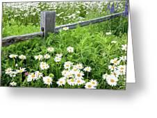Daisy Fence Greeting Card